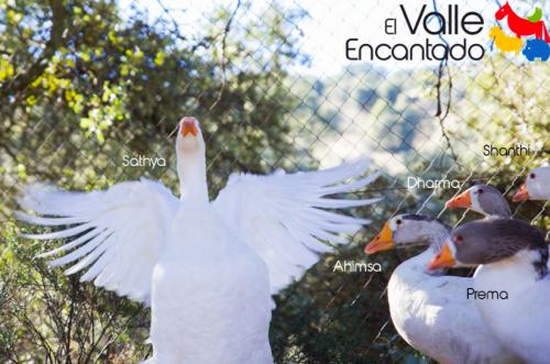 Santuario de animales en Madrid
